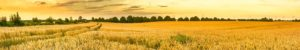 Illinois Farmland - Real Estate Appriasal